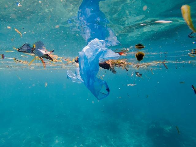 画像1: どんどん深刻化する「プラスチックごみ問題」