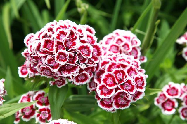 画像2: キャサリン妃が植えた花、その「別名」に胸キュン