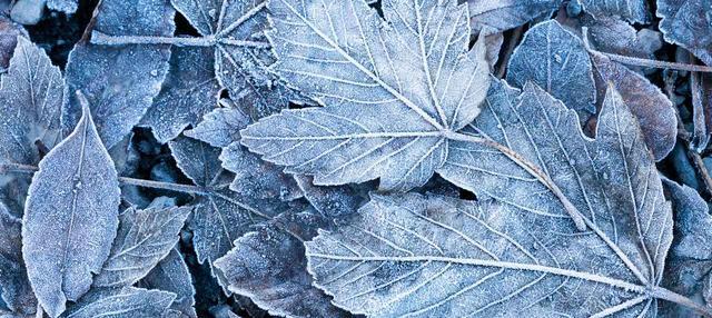 画像1: 秋オススメヘアカラー2 フロストブラウン