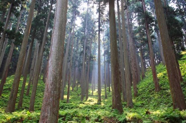 画像: キールズ、日本の森のために「マイバッグ」活動スタート