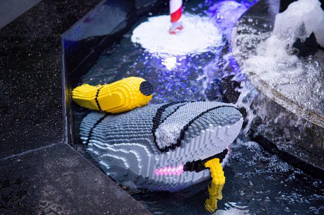 画像: サメの陸探検