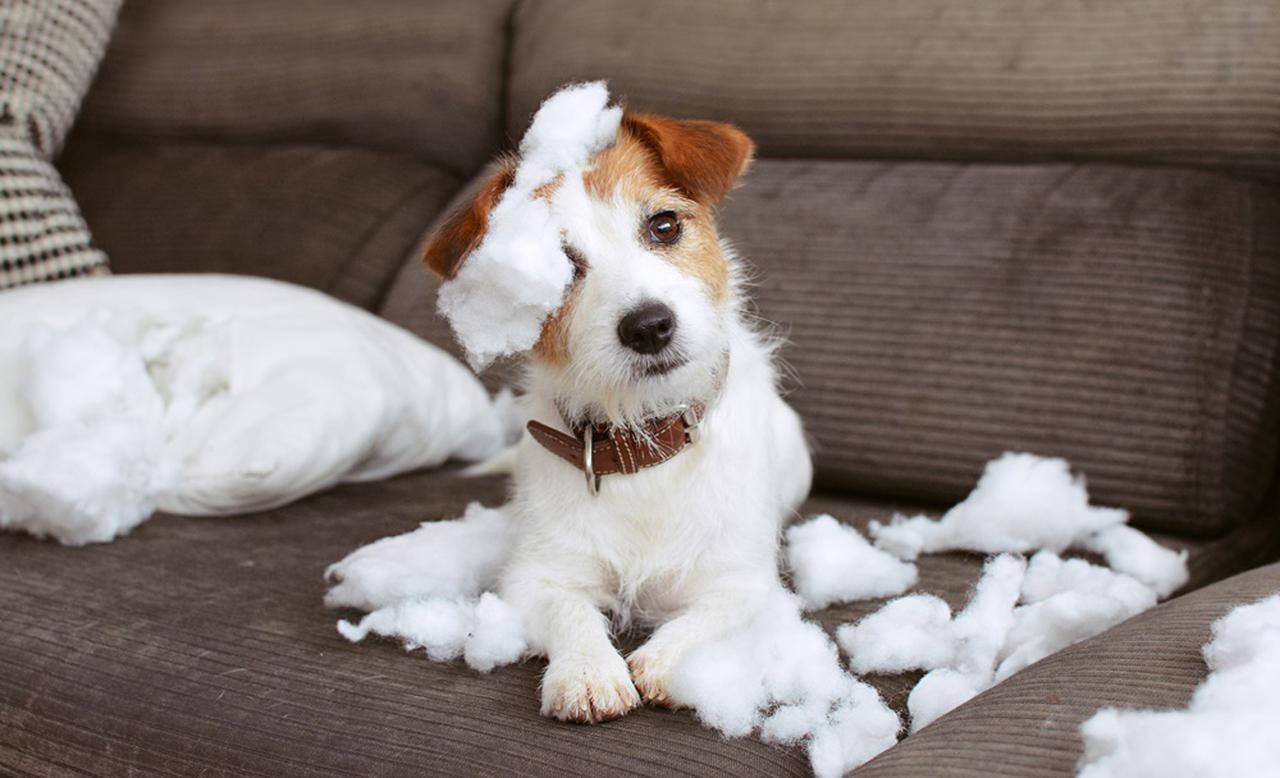 """画像: 10頭に1頭の犬が""""返却""""される"""