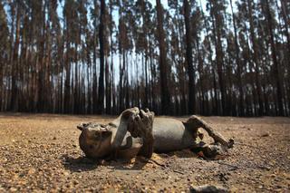 オーストラリア 火事 原因