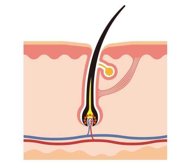 画像2: 「ビタブリッドCヘアー」は 頭皮年齢へのアプローチ で発毛促進
