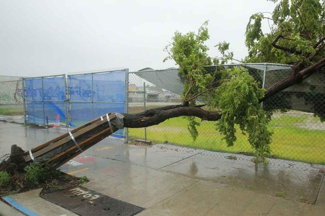 画像: 豪雨によってなぎ倒された木。(2月9日にシドニーで撮影)