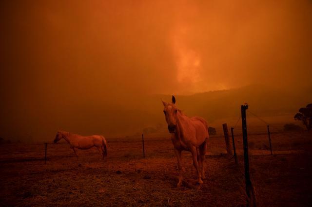 画像: 森林火災による煙も深刻。オーストラリアの首都キャンベラで。(2020年2月1日に撮影)
