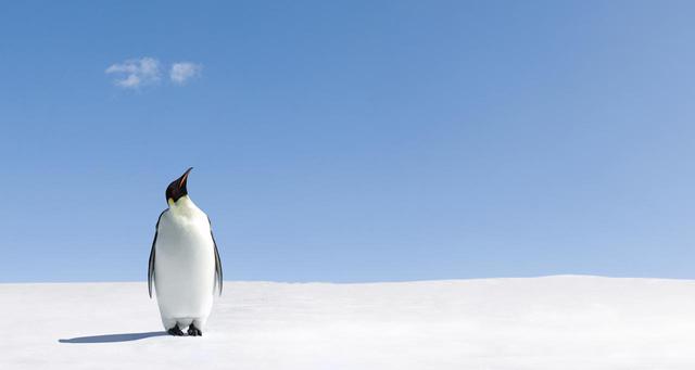 画像: 水が増えている南極