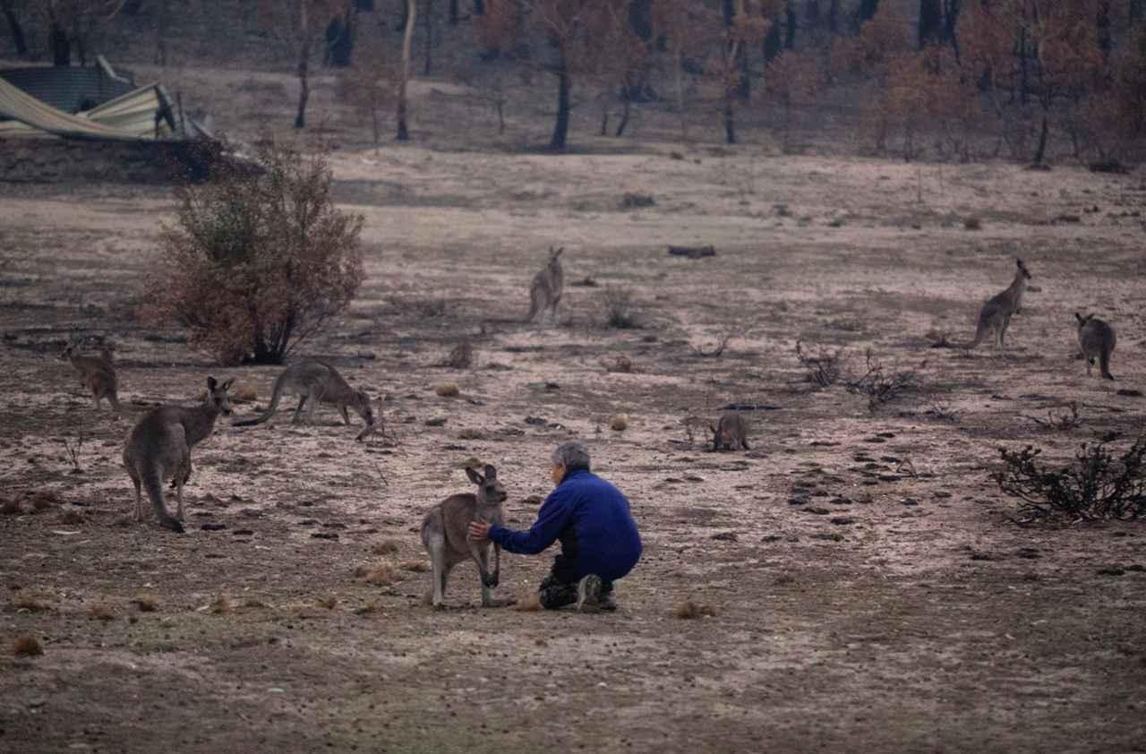 画像: 野生生物の置かれている状況