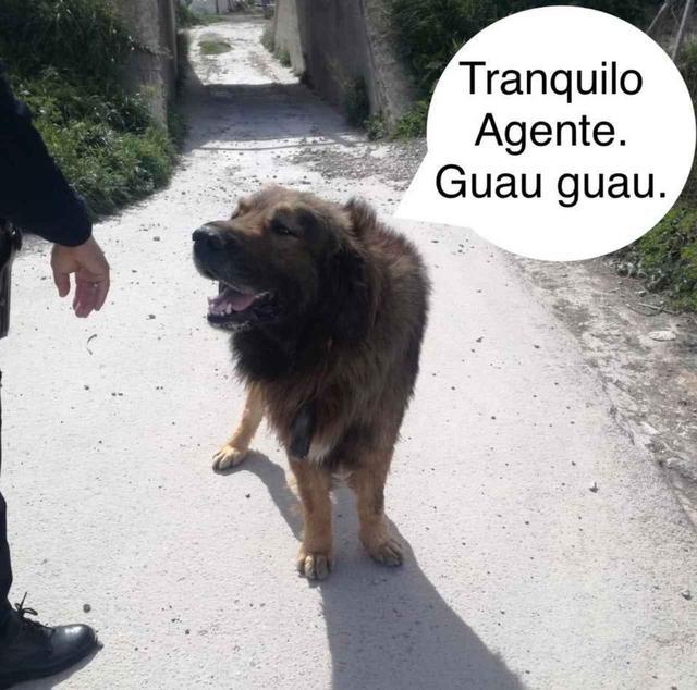 画像: 保護された犬。 ⓒPolicía Local Molina de Segura/Facebook