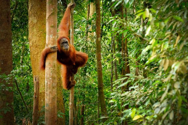 画像: 国際森林デーの祝い方