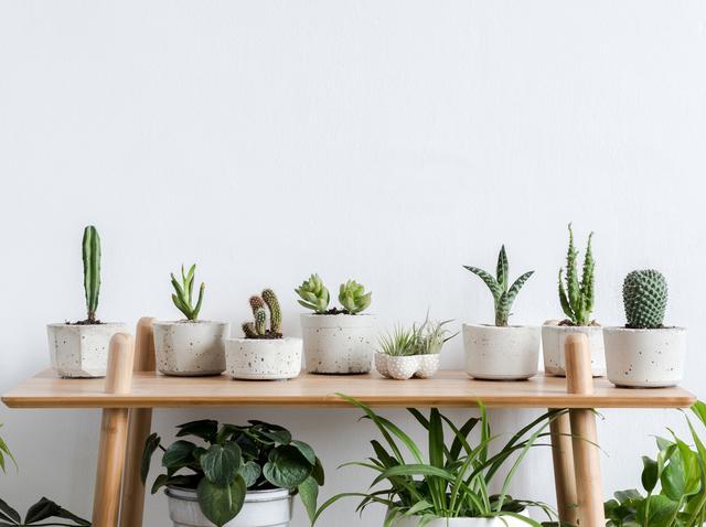 画像: 観葉植物を部屋に飾る