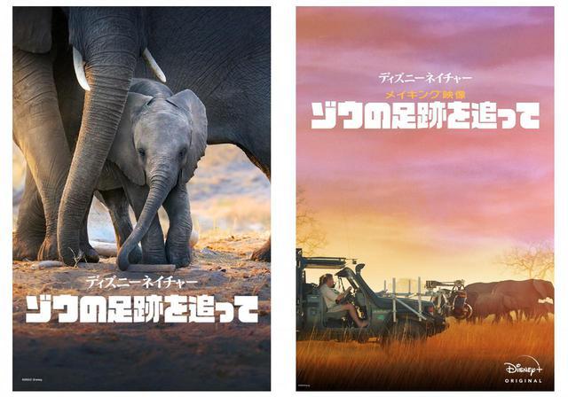 画像: 『ディズニーネイチャー/ゾウの足跡を追って』(左)と『ディズニーネイチャー/メイキング映像 ~ゾウの足跡を追って~』(右)はディズニープラスで配信中 Photo:© 2020 Disney