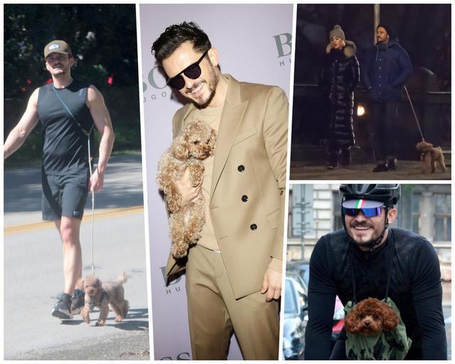 画像: 最初はフリン君に頼まれて飼い始めた犬だったが、フリン君を差し置いてオーランドのほうがゾッコンになってしまったようで、海外にも一緒に連れて行ったり、ファッションショーに同伴したり、たいそう可愛がっている様子だった。