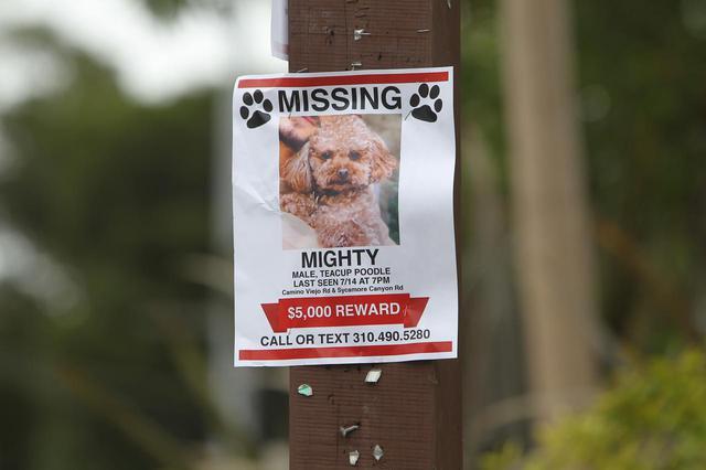 画像: マイティの情報を提供を呼びかける貼り紙には、最後に目撃されたのは「現地時間7月14日の夜7時」と書かれていた。
