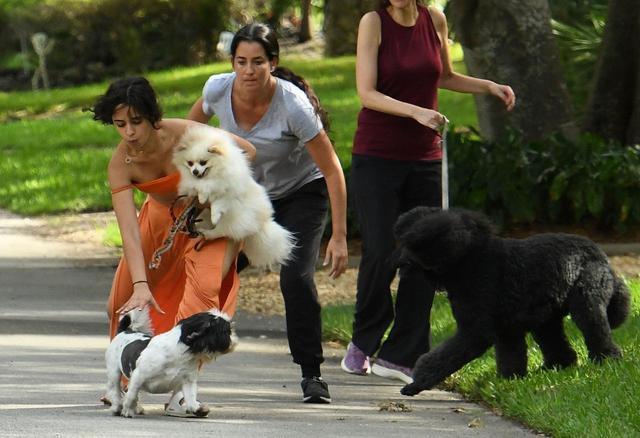画像2: ショーン&カミラが新たな家族の一員を紹介