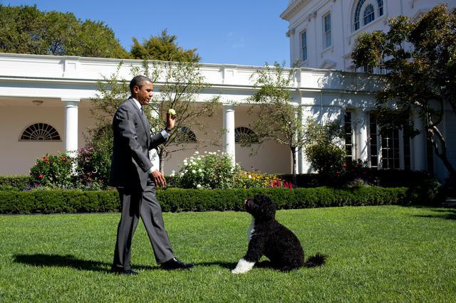 画像2: ホワイトハウスに「ファーストドッグ」が戻ってくる