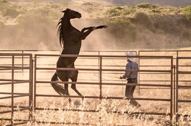 画像: 映画の撮影をきっかけに野生馬を支援する団体を設立して、馬を保護馬として迎え入れたと聞きましたがその経緯を聞かせていただけますか?