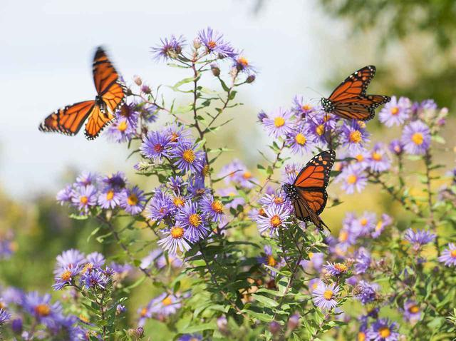 画像: 目元に蝶を描いた新感覚メイクがSNSで話題