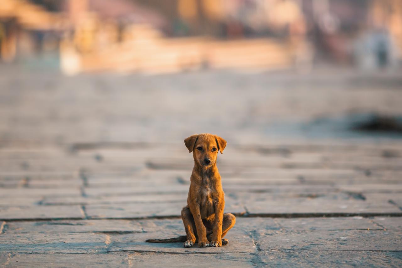 画像: コロナ禍でペットを捨てる人も増加…