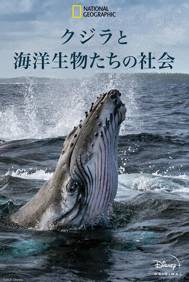 画像: 『クジラと海洋生物たちの社会』の内容&日本版予告