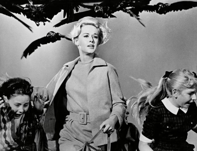 画像: 映画『鳥』より。 ⒸAlfred J. Hitchcock Productions