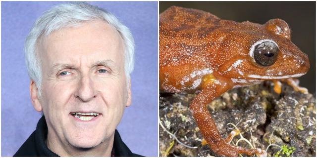 画像: カエルの「ジェームズキャメロニ」