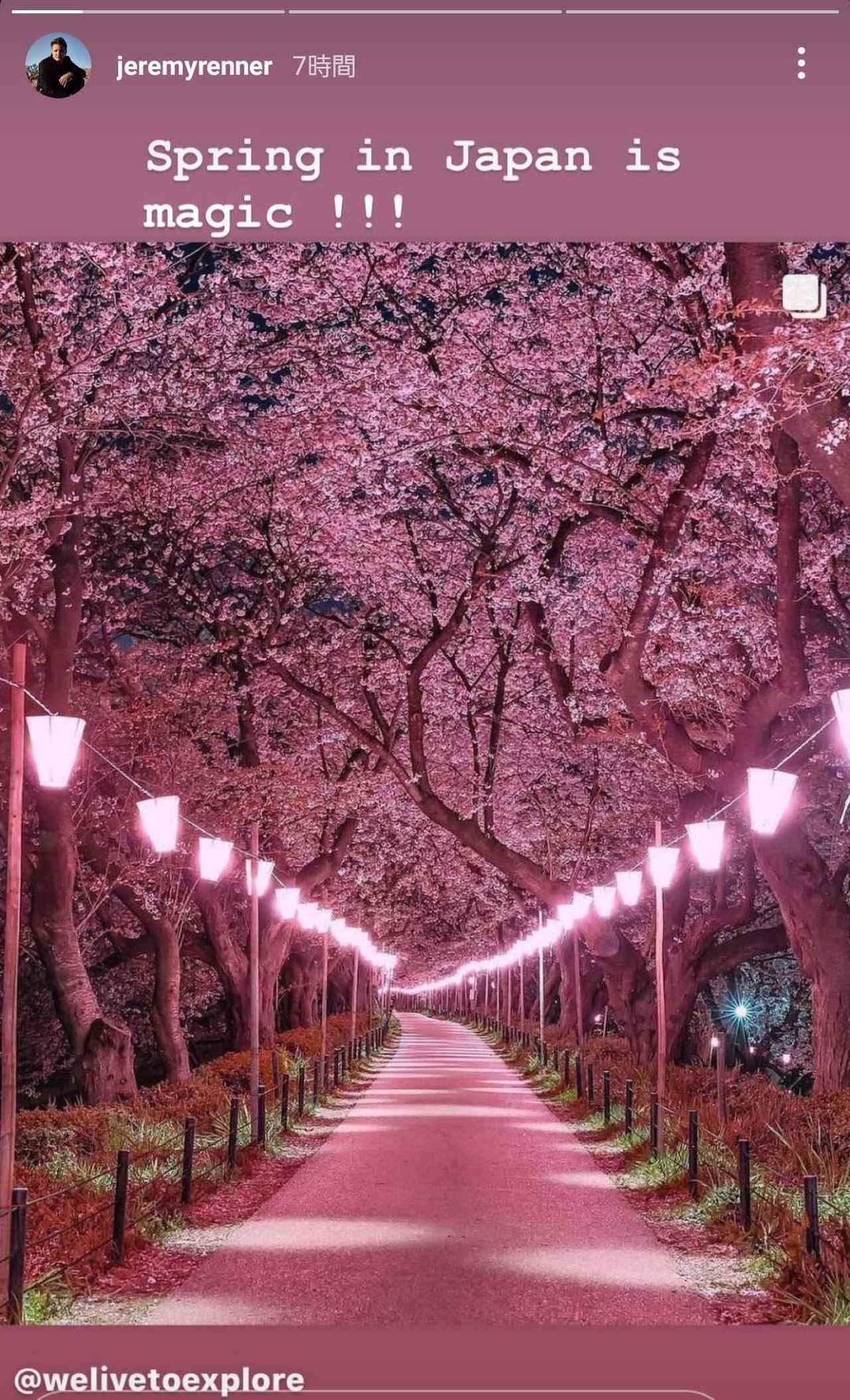 画像2: ジェレミー・レナーが桜満開の景色に感動