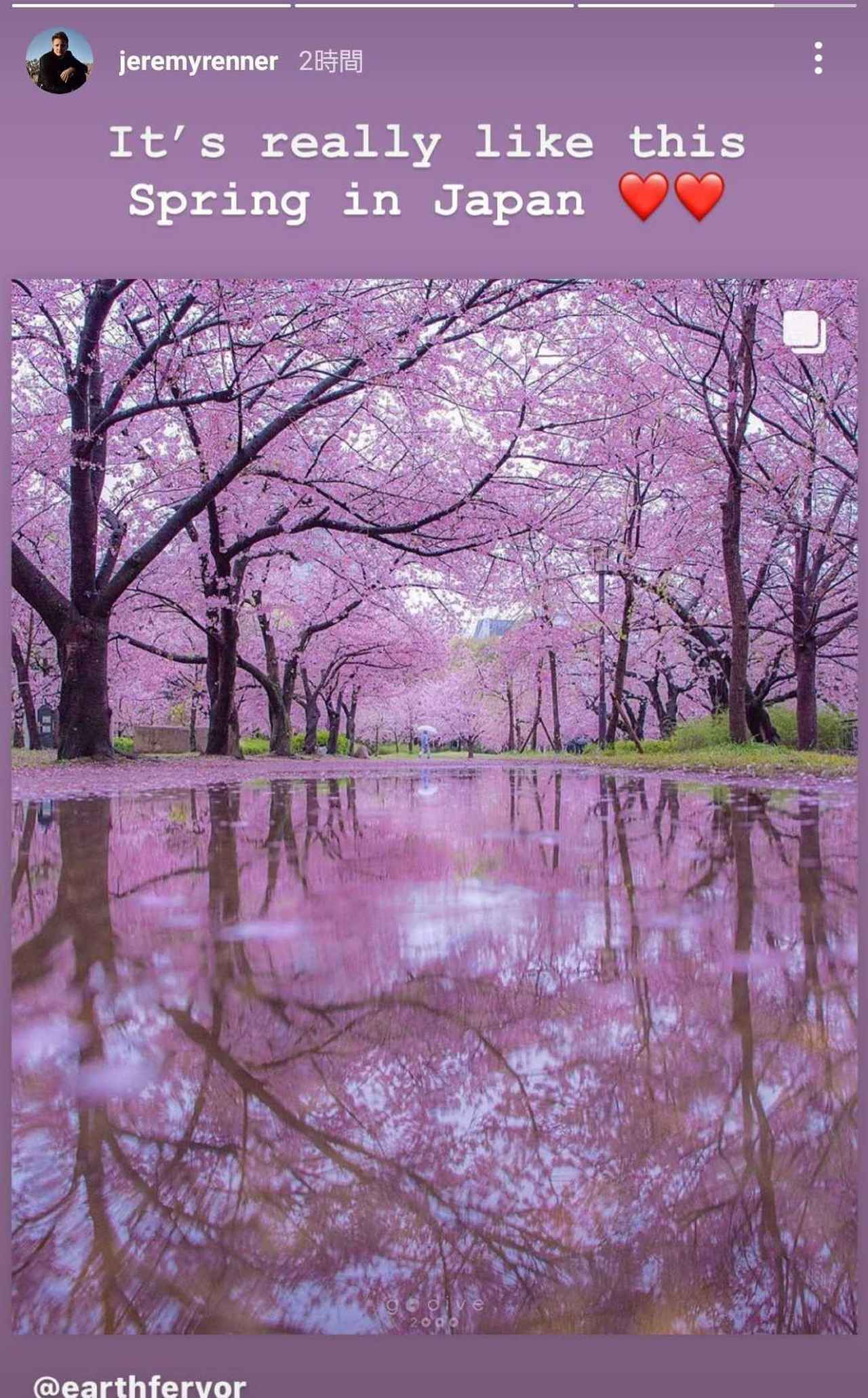 画像3: ジェレミー・レナーが桜満開の景色に感動