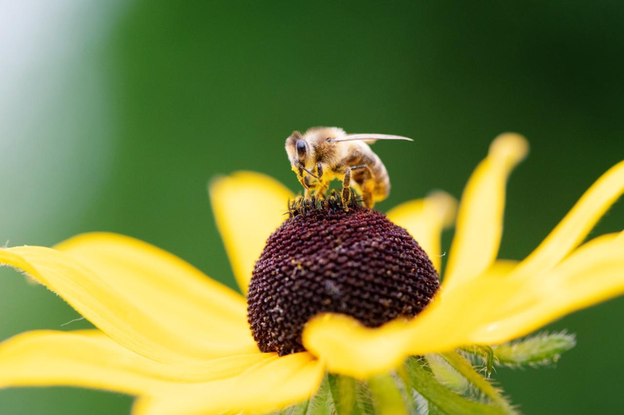 画像: アンジェリーナ・ジョリー、養蜂家育成トレーニングに参加