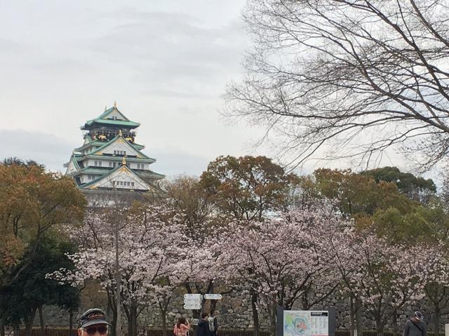画像2: 大阪城公園の桜開花状況