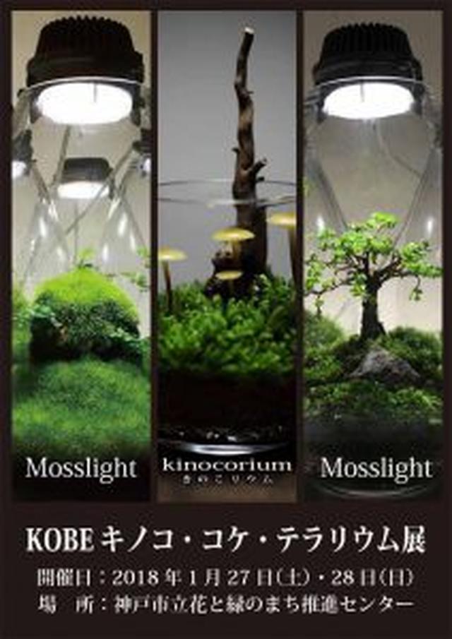 画像: [センター展示室]平成30年1月27日(土)~1月28(日)『KOBEキノコ・コケ・テラリウム展』開催!! | 花と緑のまち推進センター