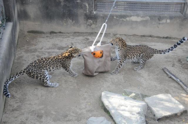画像: イベント情報|神戸市立王子動物園