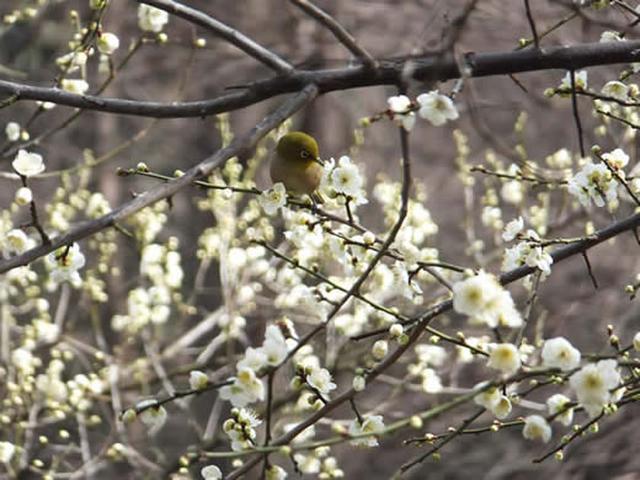 画像: 大泉緑地