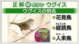 """画像2: """"花見鳥""""の別名をもつ鳥は、次のうちどれでしょう?"""