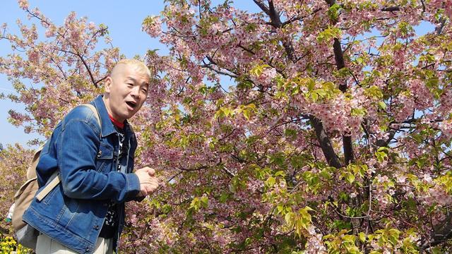 画像2: ウドちゃん、春色に染まる渥美半島の旅