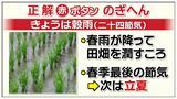 """画像2: 4月20日は二十四節気の""""穀雨(こくう)""""です。"""