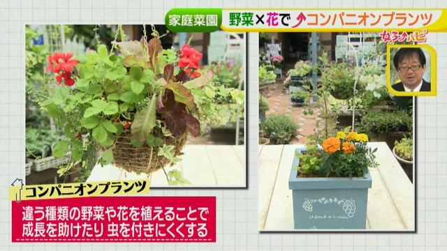 画像12: あなたも簡単にできる!家庭菜園 入門編