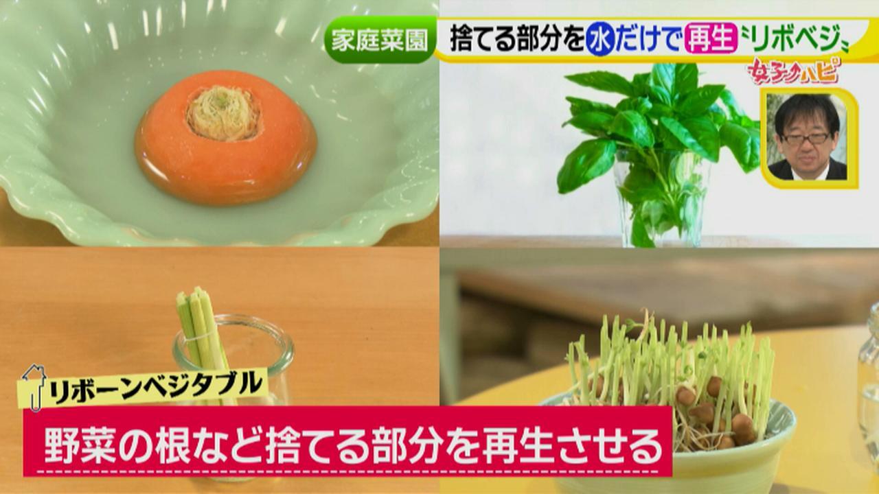 画像5: あなたも簡単にできる!家庭菜園 入門編