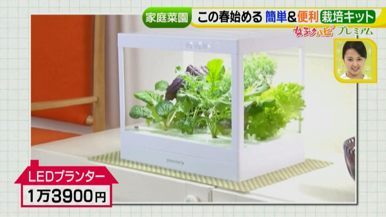 画像4: あなたも簡単にできる!家庭菜園 入門編