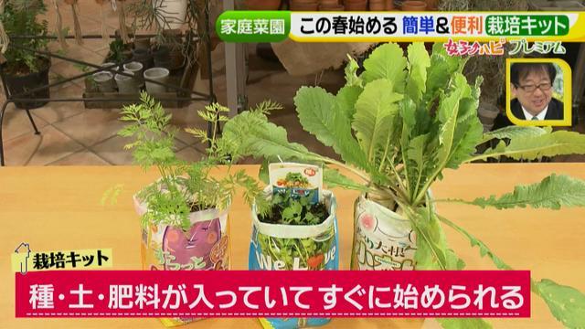 画像2: あなたも簡単にできる!家庭菜園 入門編