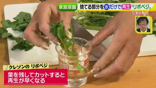 画像7: あなたも簡単にできる!家庭菜園 入門編