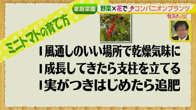 画像15: あなたも簡単にできる!家庭菜園 入門編