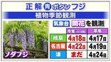 """画像2: 名古屋地方気象台が観測している""""春の花""""は?"""