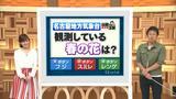 """画像1: 名古屋地方気象台が観測している""""春の花""""は?"""