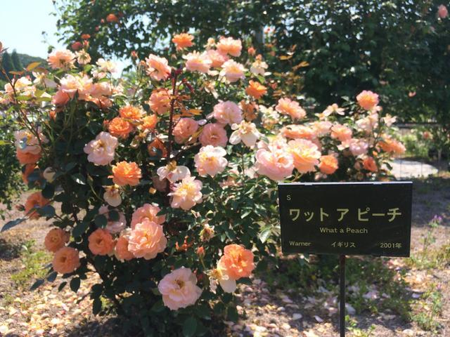 画像: 徳重杏奈、ひさしぶりの家族旅