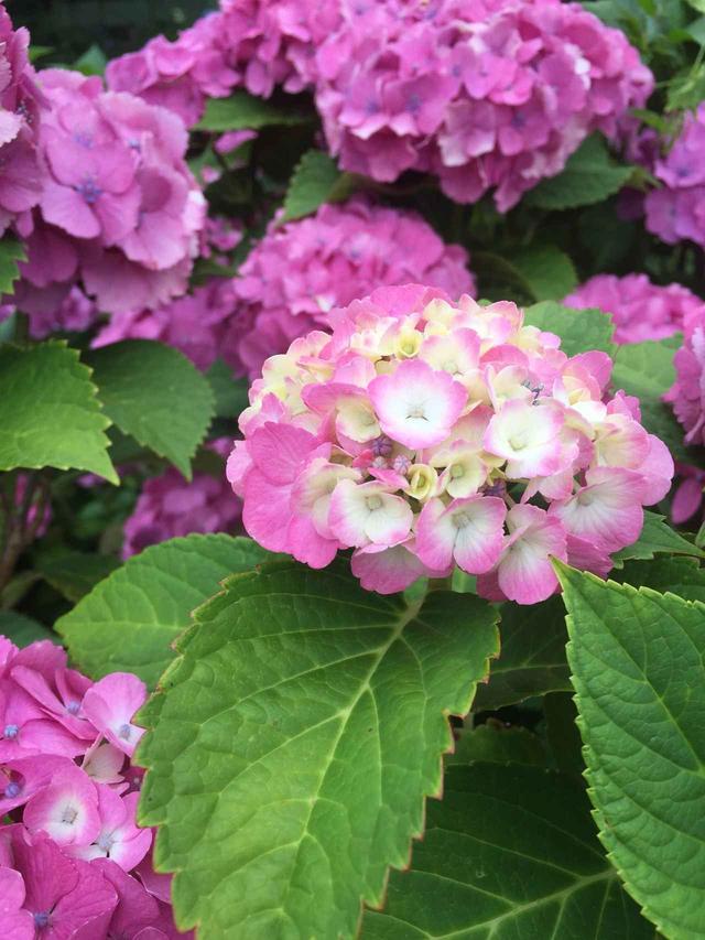 画像: 薄紫も綺麗ですが、こんなピンク紫も可愛い!