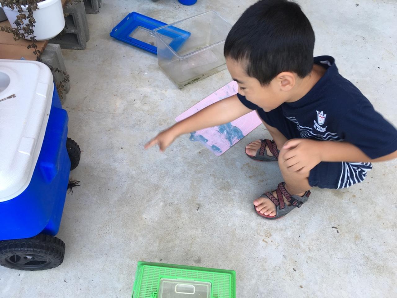 画像: 庭にクワガタを見つけ、大興奮の甥っ子くん。