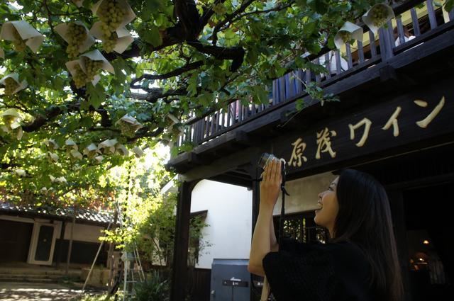 画像1: 徳重杏奈 春が好きだけど、秋も好き。