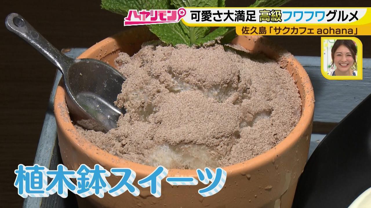 画像10: 行くなら今!「佐久島」~カフェ編~