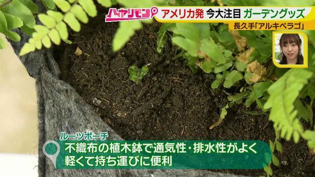 画像13: お庭が選べる?!軽井沢気分にひたれる癒しのガーデンカフェ♪
